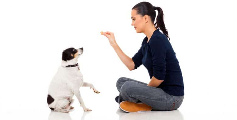 Woman trains a dog to sit and wait for a treat