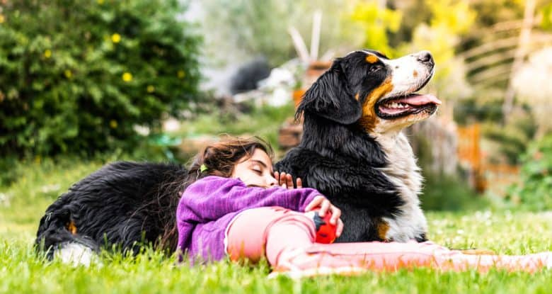 Young girl sleeping on a Bernese Mountain dog