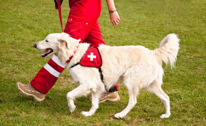 search and rescue dog being guided