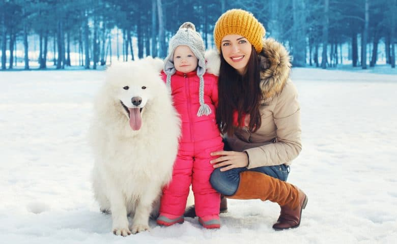 Adorable Samoyed dog with its owners