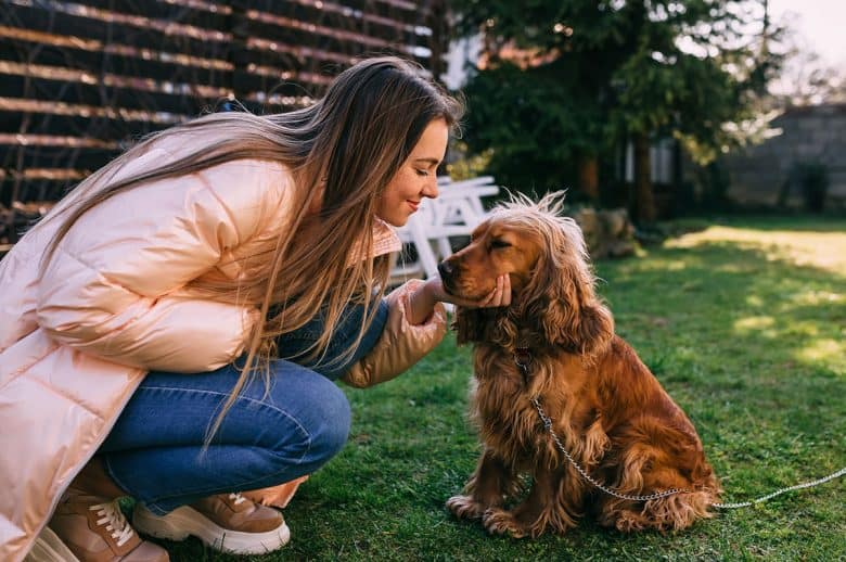 Beautiful woman with her English Cocker Spaniel dog