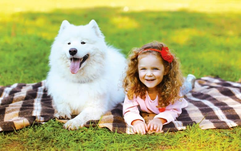 Cheerful Samoyed dog together with a little girl
