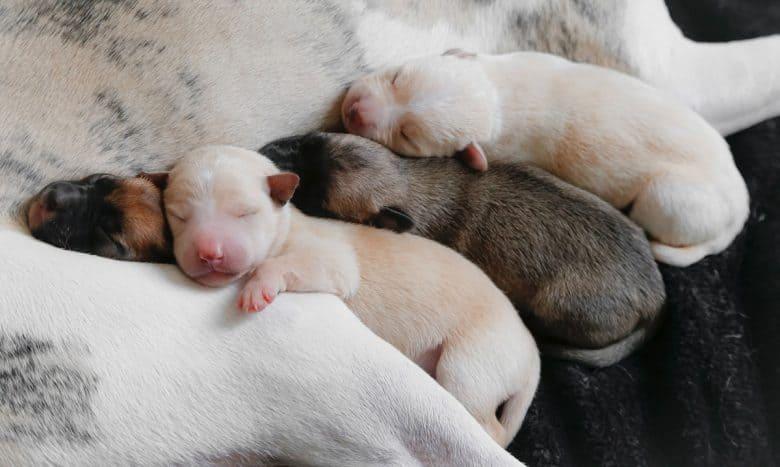 Adorable sleeping newborn puppies