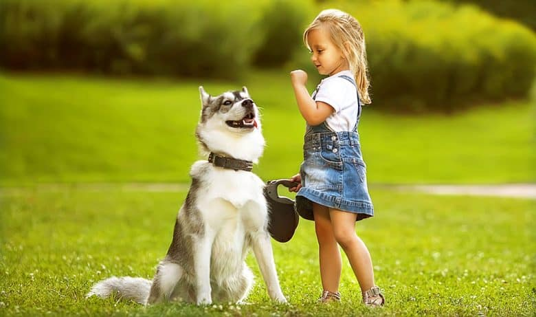 Husky dog playing with the little girl
