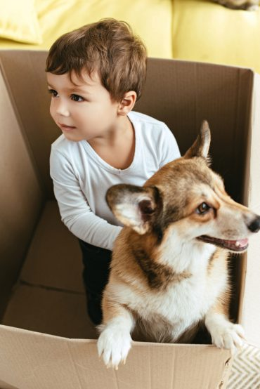 Corgi playing with a child in a box