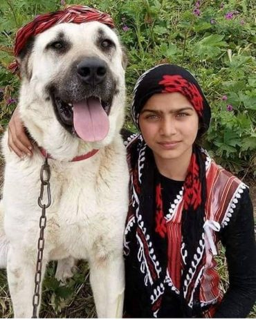 Kangal dog wearing a hat and sitting beside a girl