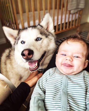 Siberian Husky standing beside a baby