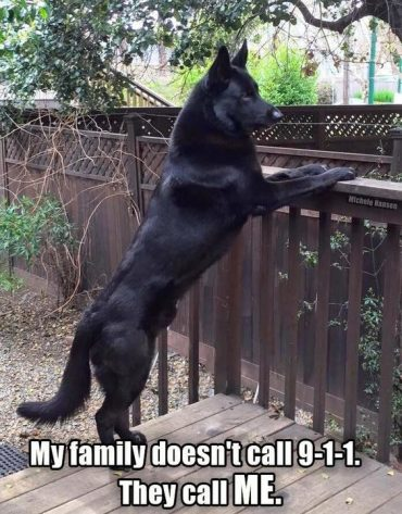 Check out these funny German Shepherd memes