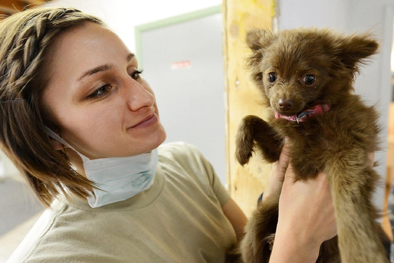 A vet treats a puppy