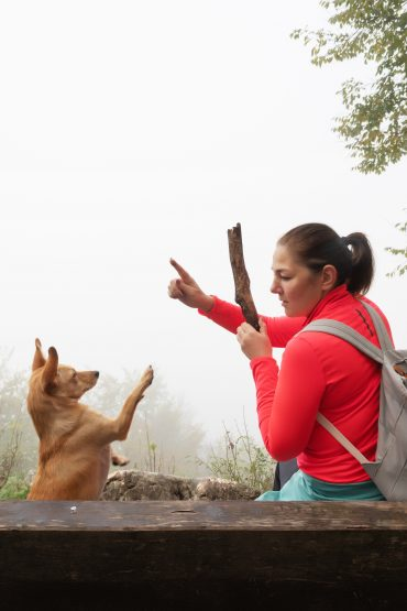 Chihuahua Terrier mix being trained outdoors by its owner