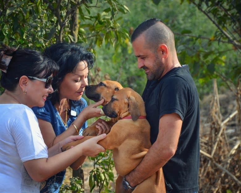 two women buying a Boerboel puppy in a breeding farm