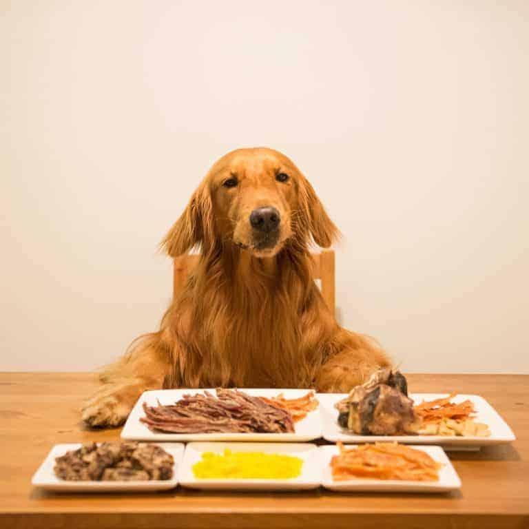 Choosing the best dog food for Golden Retriever