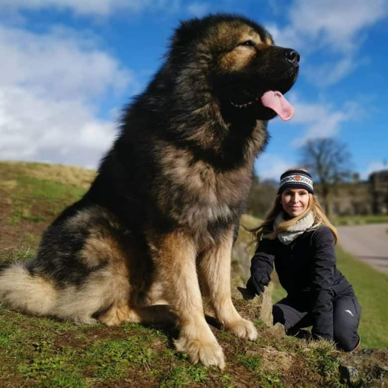 Caucasian Mountain Dog with its owner