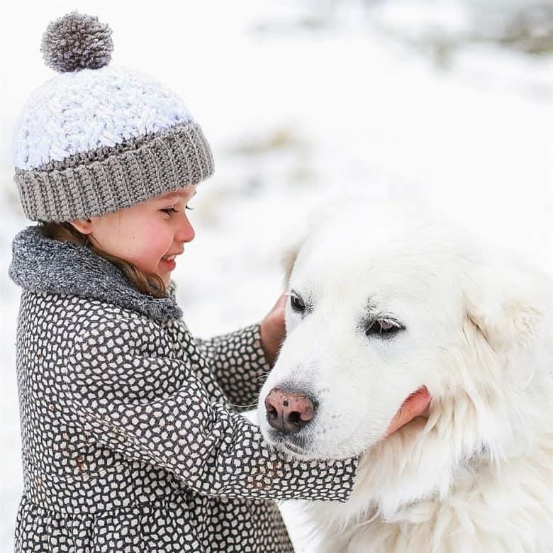 Great Pyrenees Lab mix with the little girl