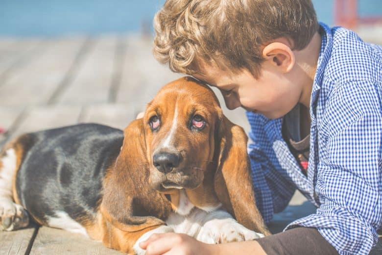 Basset Hound with a little boy