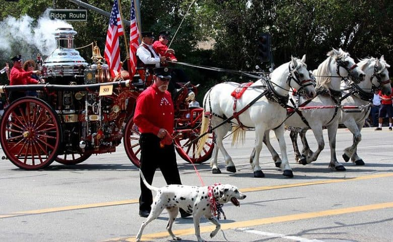 Old fire engine and the Dalmatian dog