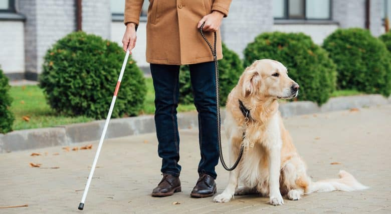 Blind man walking with the guide dog