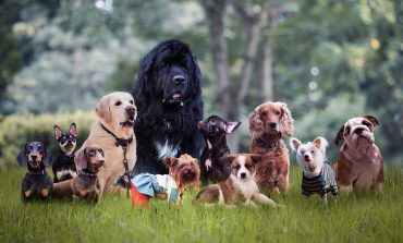Different breeds of dogs sitting on the grass