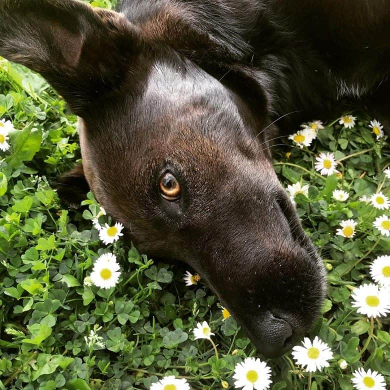 Fox Terrier Lab mix dog loves nature