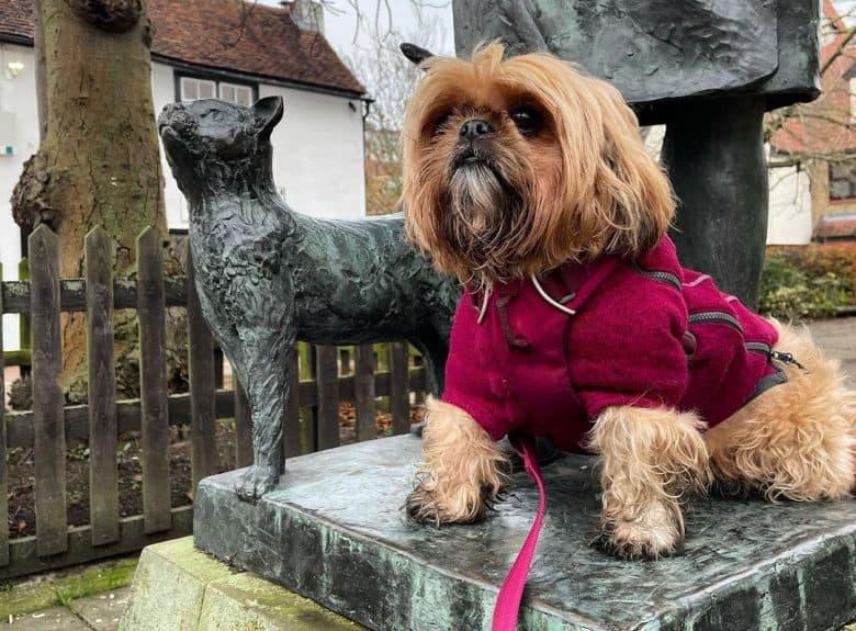 Gold Shih Tzu dog sitting on a statue