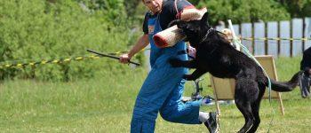 Intensive Schutzhund dog training