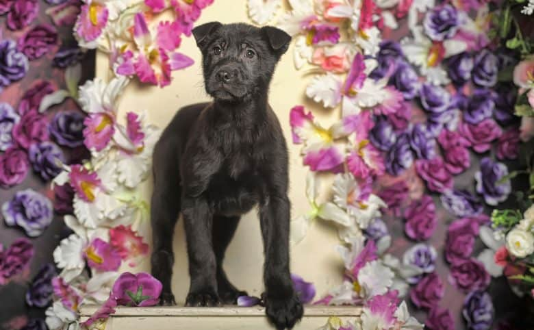 Lab Terrier mix in a floral background