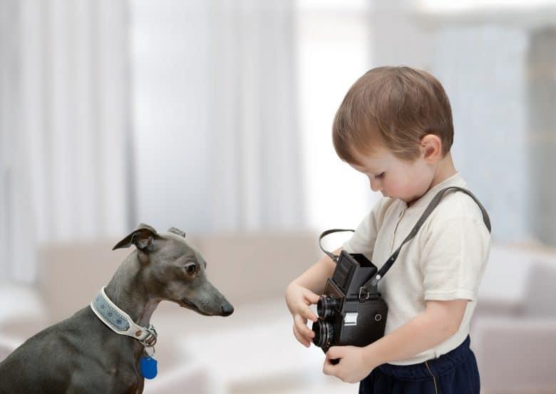 Italian Greyhound with a little boy