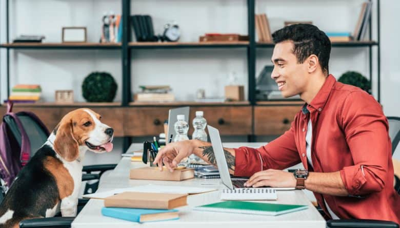 Man looking at Beagle dog while working at desk