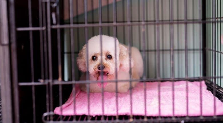 Panting dog inside a big crate