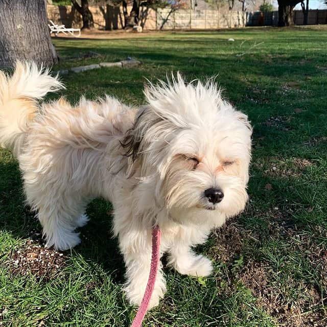 Playful Malchi on a windy day