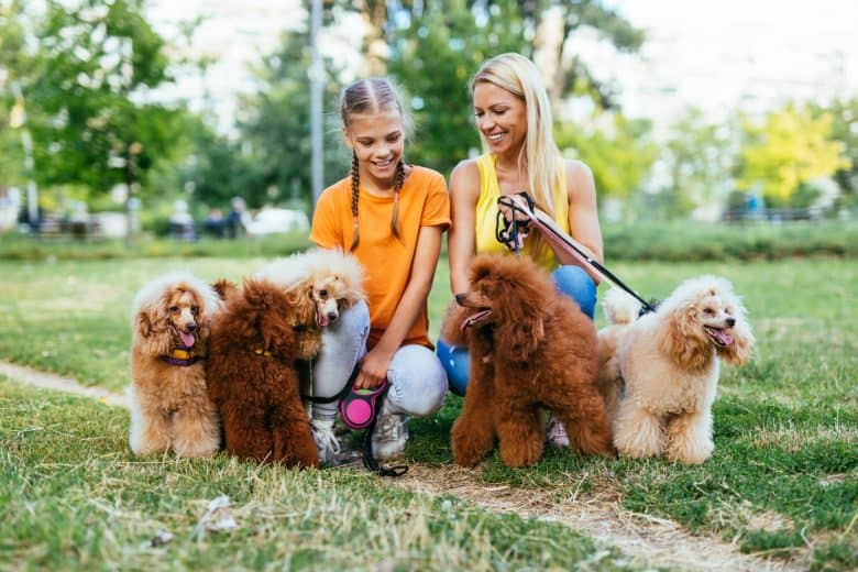 Poodles enjoying their day-out in a park