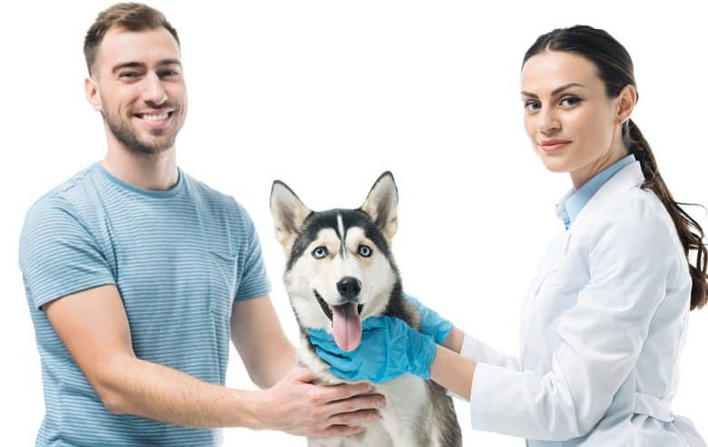 Owner with his Husky dog and the Veterinarian