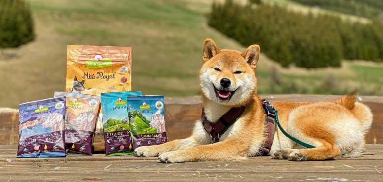 A Shiba Inu posing with dog foods and smiling