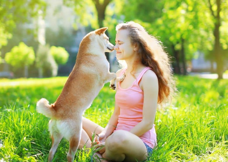 A Shiba Inu kissing its owners face in the park