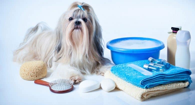 Shih Tzu dog ready to take a bath