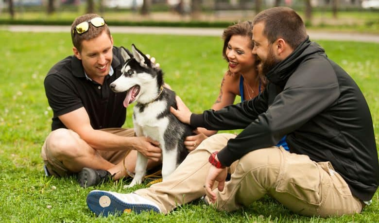 Three friends petting a Husky dog at the park