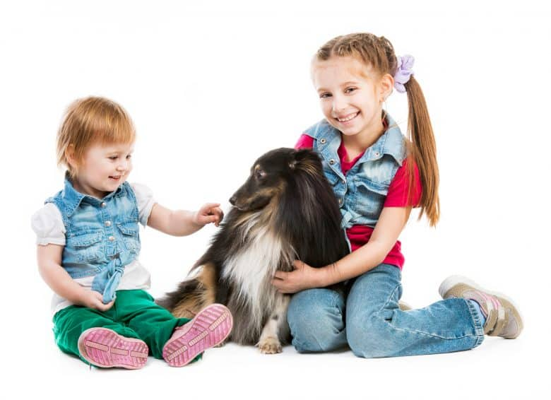 Two kids playing with a Sheltie