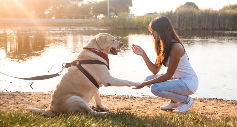 Woman teaching Labrador dog on the riverside