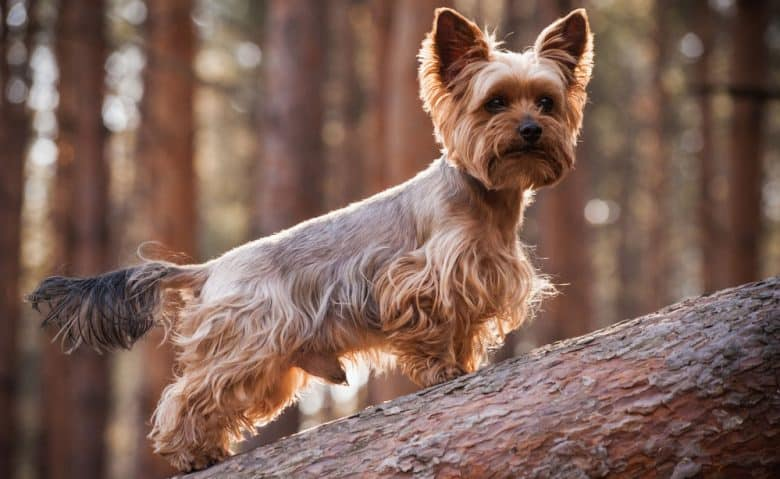 Yorkshire Terrier dog with a kennel haircut