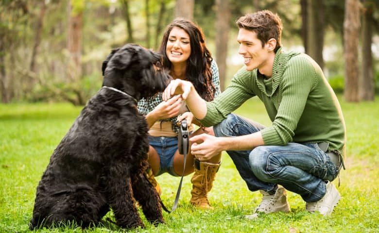 Young couple with the Giant Schnauzer dog