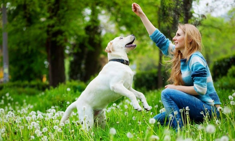 Beautiful woman playing her Labrador Retriever on the meadow