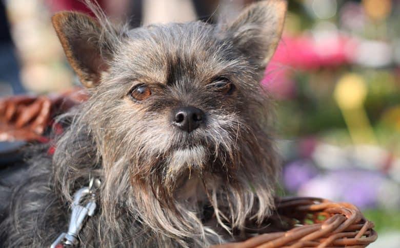Dog portrait sitting on the basket