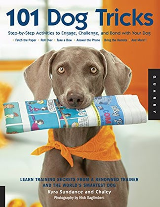 Activities to Engage Challenge and Bond with Your Dog