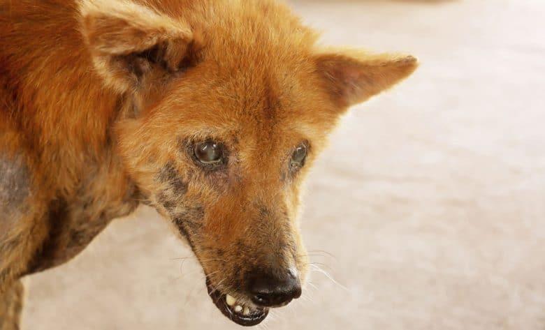 Stray dog gets skin disease