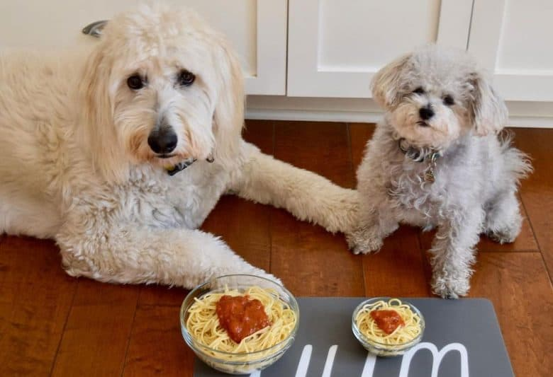Two dogs getting spaghetti treats