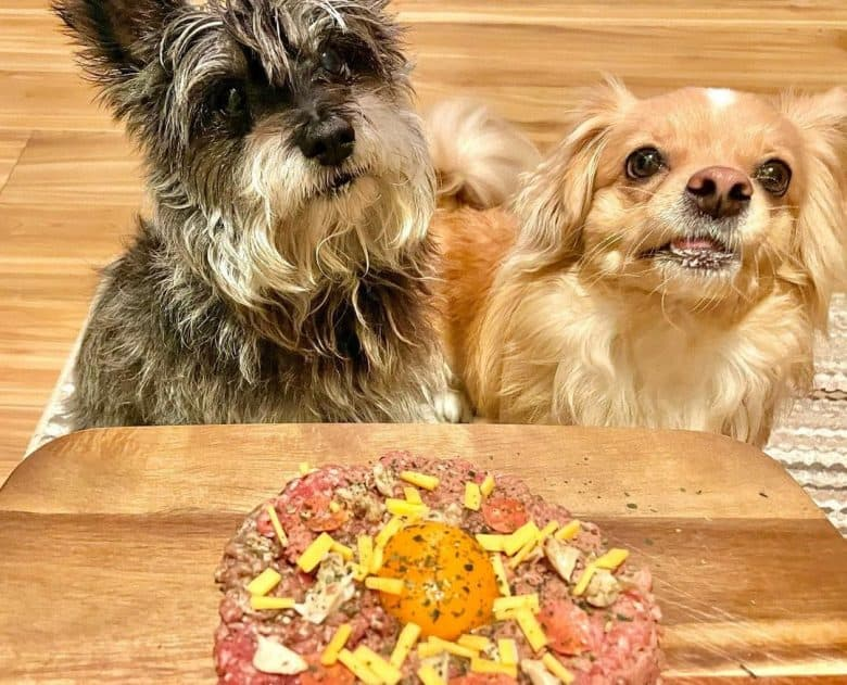 Two dogs adorably waiting for their meat pizza