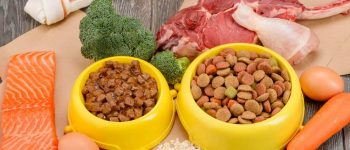Different wet and dry dog foods