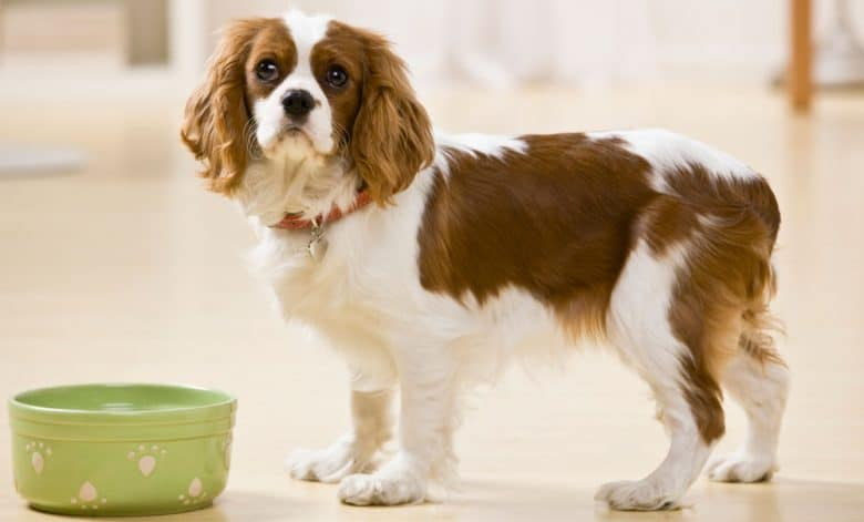Young dog waiting with bowl for food