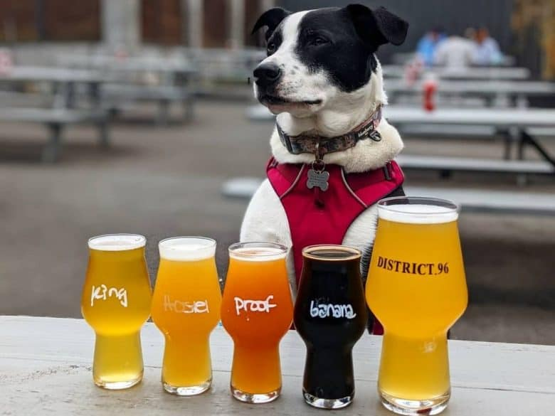 a Border Collie standing with different beer color on glasses