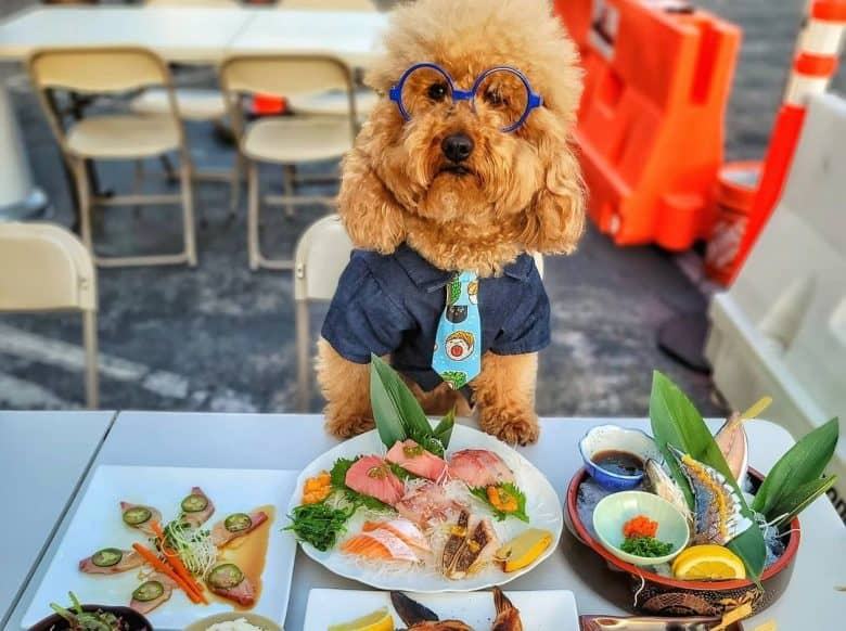 a Goldendoodle standing on a table filled with Japanese food